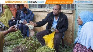 Mustafa, a local khat exporter based in Awaday, Ethiopia, examines fresh khat brought to the market in Awaday for export on July 30, 2014. Awaday is the biggest town in the eastern region of Ethiopia for khat growing, exporting to nearby countries such as Somalia and Djbouti, and also to Arab states.