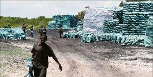 charcoal somalia