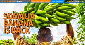 Somalia Banana - Bartamaha